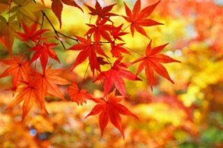 秋の体験レッスン